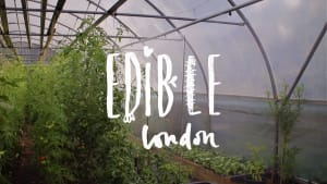Edible London logo and image of food growing in greenhouse
